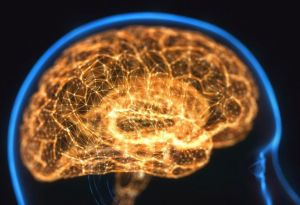 b_300_0_16777215_00_https___cdn-0.hypescience.com_wp-content_uploads_2020_05_cerebro-iluminado-838x574.jpg