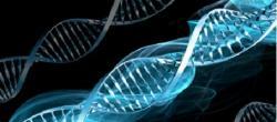 Genes envolvidos na patogênese do Diabetes tipo 2
